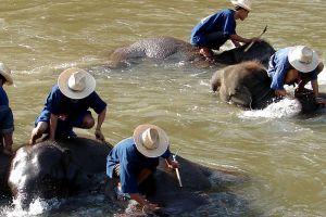 Maetaeng-Elephant-Park-Chiang-Mai-Thailand-006.jpg