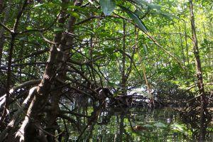 Mein-ma-hla-Kyun-Wildlife-Sanctuary-Ayeyarwady-Region-Myanmar-003.jpg