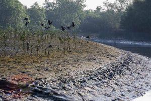 Mein-ma-hla-Kyun-Wildlife-Sanctuary-Ayeyarwady-Region-Myanmar-004.jpg
