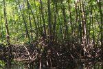 Mein-ma-hla-Kyun-Wildlife-Sanctuary-Ayeyarwady-Region-Myanmar-005.jpg