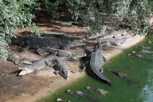 Million-Years-Stone-Park-Pattaya-Crocodile-Farm-Chonburi-Thailand-06.jpg