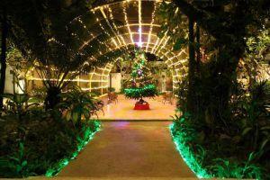 Mimosa-Resort-Spa-Samui-Thailand-Garden.jpg