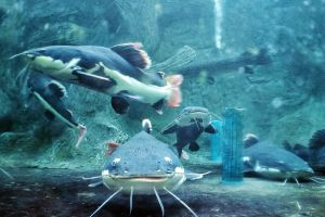Monsters-Aquarium-Pattaya-Chonburi-Thailand-03.jpg
