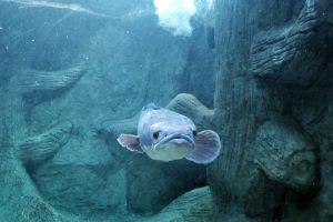 Monsters-Aquarium-Pattaya-Chonburi-Thailand-04.jpg