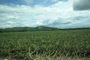 Mount-Matutum-South-Cotabato-Philippines-004.jpg