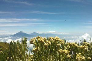 Mount-Merbabu-Central-Java-Indonesia-005.jpg