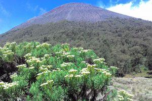 Mount-Semeru-East-Java-Indonesia-001.jpg