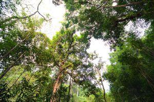 Namtok-Phliu-National-Park-Chanthaburi-Thailand-004.jpg