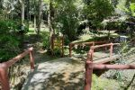 Namtok-Raman-Forest-Park-Phang-Nga-Thailand-03.jpg