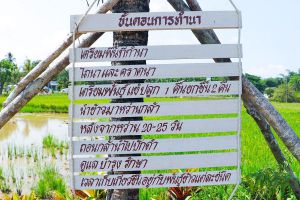 Napokae-Local-Cultural-Learning-Center-Phatthalung-Thailand-06.jpg