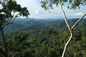 Nature-Reserve-Bokeo-Laos-004.jpg
