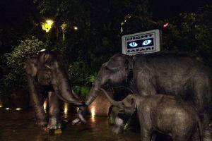 Night-Safari-Singapore-001.jpg