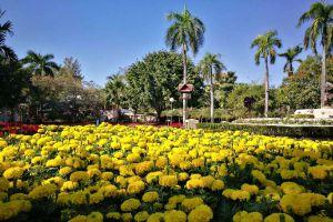Nong-Buak-Haad-Public-Park-Chiang-Mai-Thailand-01.jpg