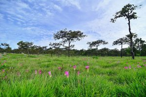 Pa-Hin-Ngam-National-Park-Chaiyaphum-Thailand-01.jpg
