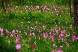 Pa-Hin-Ngam-National-Park-Chaiyaphum-Thailand-04.jpg