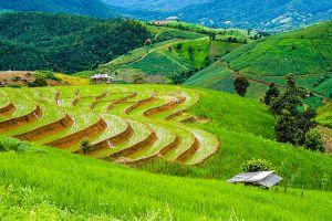 Pa-Pong-Piang-Rice-Terraces-Chiang-Mai-Thailand-01.jpg