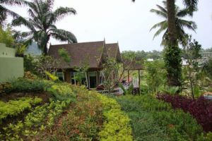 Palm-Paradise-Resort-Krabi-Thailand-Garden.jpg
