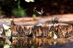 Pang-Sida-National-Park-Sakaew-Thailand-003.jpg