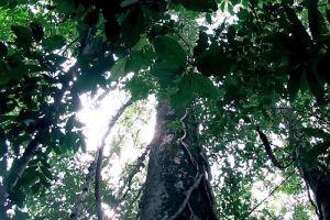 Pang-Sida-National-Park-Sakaew-Thailand-005.jpg