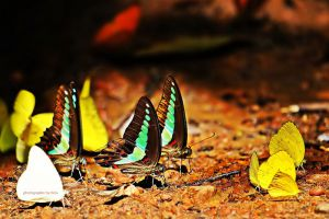 Pang-Sida-National-Park-Sakaew-Thailand-007.jpg