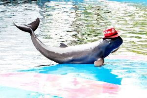 Pattaya-Dolphin-World-Chonburi-Thailand-01.jpg
