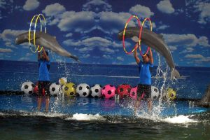 Pattaya-Dolphin-World-Chonburi-Thailand-02.jpg