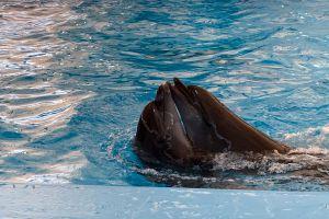 Pattaya-Dolphin-World-Chonburi-Thailand-03.jpg
