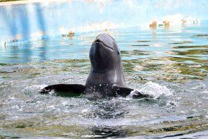 Pattaya-Dolphin-World-Chonburi-Thailand-04.jpg