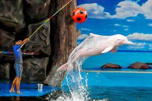 Pattaya-Dolphin-World-Chonburi-Thailand-06.jpg