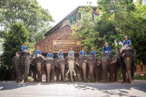 Pattaya-Elephant-Village-Chonburi-Thailand-01.jpg
