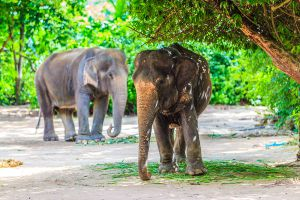Pattaya-Elephant-Village-Chonburi-Thailand-02.jpg
