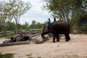 Pattaya-Elephant-Village-Chonburi-Thailand-03.jpg