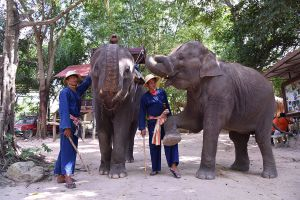 Pattaya-Elephant-Village-Chonburi-Thailand-05.jpg