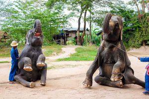 Pattaya-Elephant-Village-Chonburi-Thailand-06.jpg
