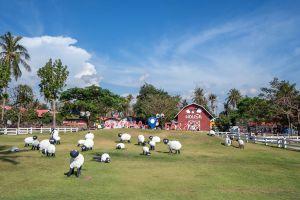 Pattaya-Sheep-Farm-Chonburi-Thailand-02.jpg