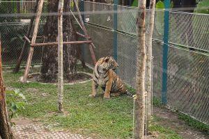 Pattaya-Tiger-Park-Chonburi-Thailand-02.jpg