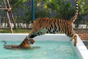 Pattaya-Tiger-Park-Chonburi-Thailand-05.jpg