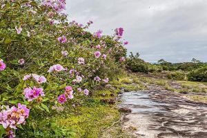 Pha-Luang-Waterfall-Forest-Park-Ubon-Ratchathani-Thailand-03.jpg