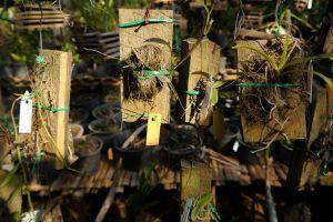 Pha-Tad-Ke-Botanical-Garden-Luang-Prabang-Laos-002.jpg