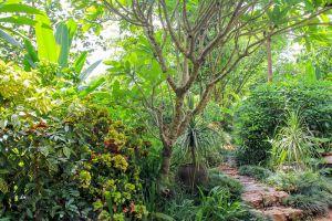Pha-Tad-Ke-Botanical-Garden-Luang-Prabang-Laos-005.jpg