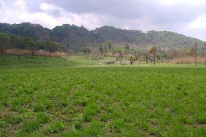 Phawngpui-National-Park-Chin-State-Myanmar-005.jpg