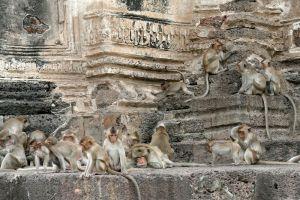 Phra-Prang-Sam-Yot-Lopburi-Thailand-002.jpg