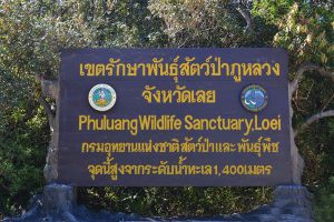 Phu-Luang-Wildlife-Sanctuary-Loei-Thailand-005.jpg