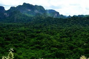Phu-Pha-Lom-Forest-Park-Loei-Thailand-06.jpg