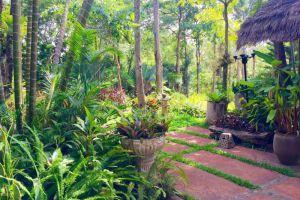 Phu-Pha-Nam-Resort-Spa-Loei-Thailand-Garden.jpg