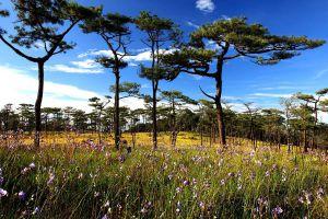 Phu-Soi-Dao-National-Park-Uttaradit-Thailand-04.jpg