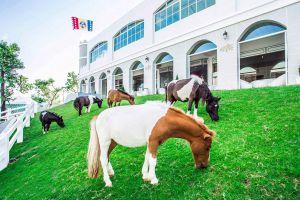 Pipo-Pony-Club-Chonburi-Thailand-01.jpg