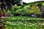 Porploen-Hip-Resort-Suanphung-Ratchaburi-Thailand-Garden.jpg