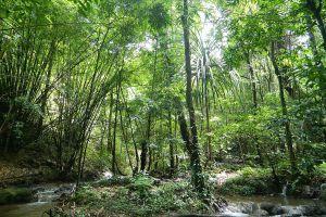 Sa-Nang-Manora-Forest-Park-Phang-Nga-Thailand-07.jpg