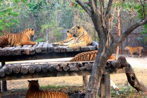 Safari-World-Bangkok-Thailand-05.jpg